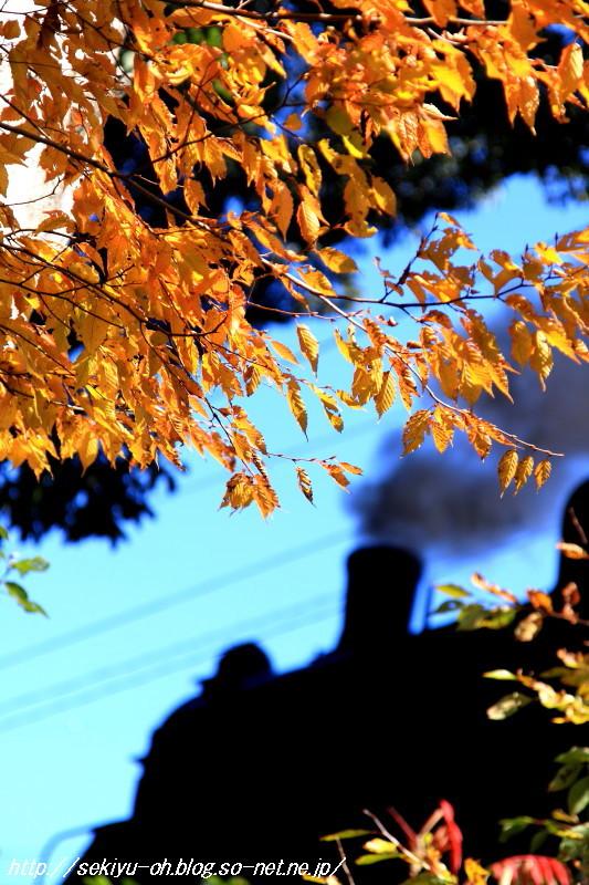 20101120_084.jpg